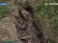 В селе Черниговской области нашли мертвого крокодила