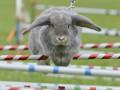 В апреле впервые в Украине пройдут кроличьи бега