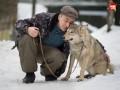 В России хозяин приюта гуляет по городу с волчицей