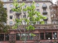 В центре Киева вновь зацвели каштаны