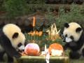 В Китае панды шикарно отпраздновали день рождения
