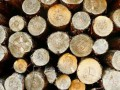 Вырубка леса вредит экологии в разы сильнее, чем предполагалось