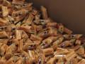 Недовольный украинскими конфетами Онищенко согласился отправить ревизоров на заводы Roshen