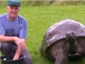 Самую старую черепаху впервые за 184 года помыли ради встречи с королевой