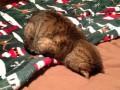 Коты тоже не любят понедельники (ФОТО)