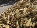 В прошлом маркетинговом году Украина экспортировала более 22 млн тонн зерна