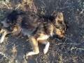 Житель Одесчины застрелил из ружья пять собак