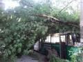 В Запорожье дерево упало на троллейбус