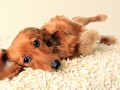 Киевлянин убил собаку друга за то, что она справила нужду в его доме