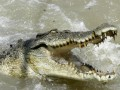 Крокодилы-бегемоты: В Нигерии после наводнения деревни заселили дикие животные