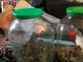 Под Киевом мужчина дома вырастил марихуаны почти на 1 млн гривен