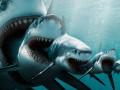 Фантастический улов: рыбаки поймали «матрешку» из двух акул (ФОТО)
