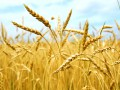 Украина обновила рекорд по количеству экспорта агропродукции