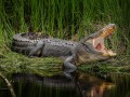 Крокодил растерзал подростка на глазах друзей