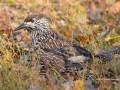 В Чернобыле засняли редкую карпатскую птицу