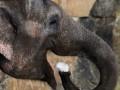 В российском цирке из-за аномальных холодов слонов согревают водкой