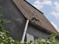 Под Одессой из зоопарка сбежала стая мартышек: воруют персики с дач