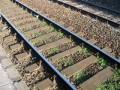 На Запорожчине поезд насмерть сбил лежащую на рельсах женщину
