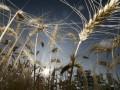 Евросоюз приступает к широкомасштабной аграрной реформе