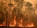 Украина предложила помощь Австралии в борьбе с лесными пожарами
