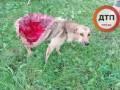 Под Винницей нелюди содрали с собаки кожу живьем (Фото 18+)