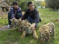 В Ташкенте скандал в зоопарке: директора арестовали за воровство еды у животных