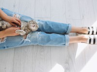 Работа мечты: на греческий остров нужен человек для ухода за котами