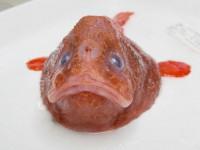 Ученые обнаружили рыбу, которая задерживает дыхание под водой – видео