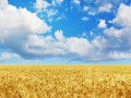 Украина с начала года экспортировала зерновых на $3 млрд