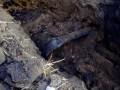 В Харьковской области обнаружили нелегальный трубопровод из РФ