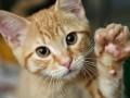 В Харькове неизвестные порубили лопатой котов