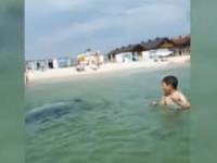 Под Херсоном дельфин приплыл на людный пляж: Играл с отдыхающими