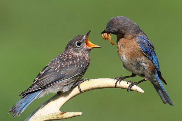птицы до: