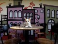 В Лондоне откроется первое кафе с кошками