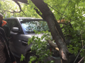 В Киеве дерево рухнуло на Range Rover, стоявший на тротуаре