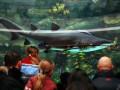 Если не принять меры,  акула в столичном ТРЦ вскоре умрет - зоозащитники