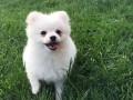 НАПК хочет отобрать собаку у полицейского начальника