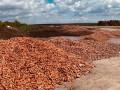 Под Киевом обанкротившийся фермер выбросил тонны моркови