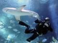 Дайвер залез в пасть к акуле и спас ей жизнь