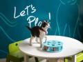 Котик на час: В США открылось первое кошачье кафе