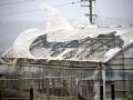 В Японии из-за тайфуна 50 тысяч человек предупредили об эвакуации