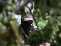 Боевики на Донбассе обустраивают новые позиции - ИС