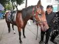 В столице Мексики кони крушили автомобили (ФОТО, ВИДЕО)