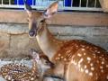 В зоопарке Межигорья замерзают животные