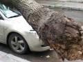 В центре Киева ветром дерево повалило на Mercedes