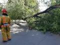 В Киеве на женщину упало дерево