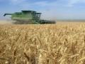 Сражающаяся с Украиной на рынке зерна Россия в 13 раз нарастила закупки пшеницы за рубежом