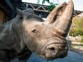 В Киевском зоопарке умерла знаменитая носорог Тревога