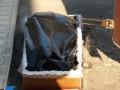 В Тернополе тело умершего от коронавируса отдали родным в черном пакете