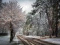 Погода в Украине на 14 апреля: Дожди и мокрый снег